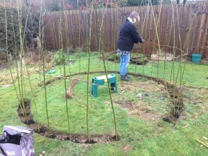 Insering the willow rods